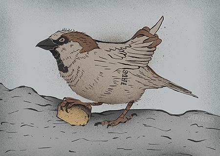 Urban Birds – Thug Sparrow