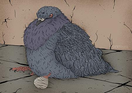 Urban Birds – Dipshit Pigeon